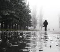 дожди2