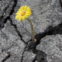 цветок сквозь