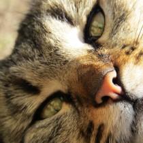 фото кот 1